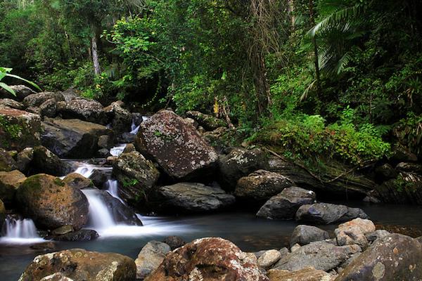 Rivière dans la forêt pluviale d'El Yunque (avec la permission de Doreeno )