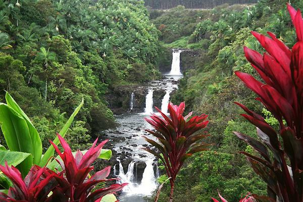 La forêt tropicale luxuriante du parc national des volcans d'Hawaï (photo avec la permission de Wasif Malik )