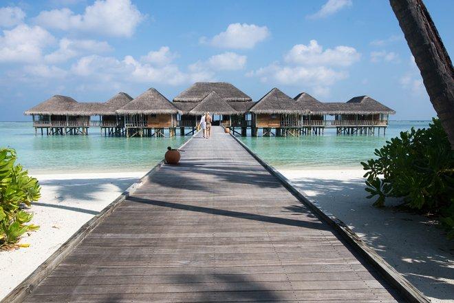 Gili Lankanfushi Maldivas / Ostra