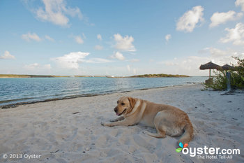 Dogs love chillin' during vacay as much as humans do!