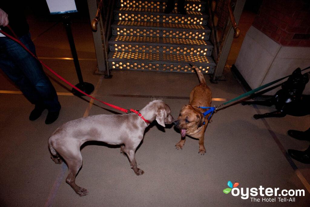 Pets at Soho Grand Hotel