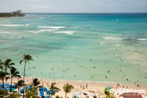 Waikiki Beach, Oahu/Oyster
