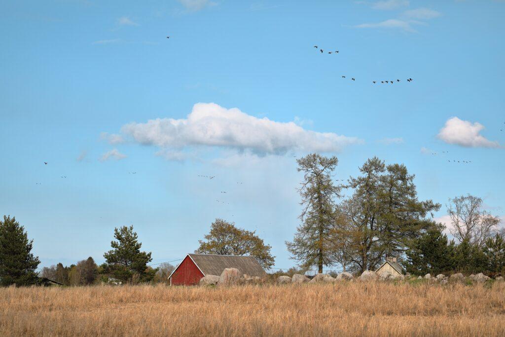 Estonia countryside