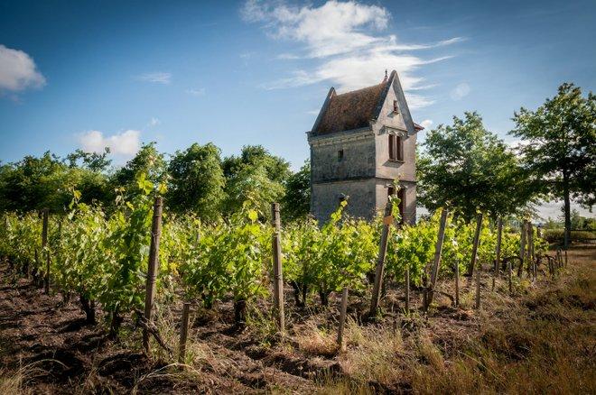 Château Picque Caillou:Guillaume via Flickr