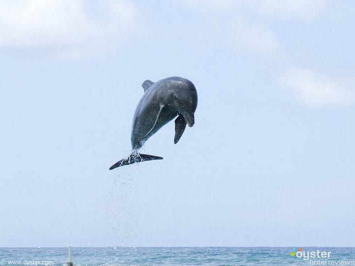 Las familias pueden nadar con delfines en una cala privada en el complejo Half Moon, Jamaica.