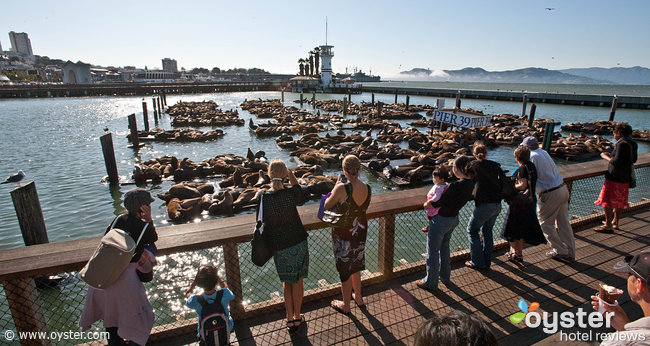 Staying near Fisherman's Wharf is a great choice for families
