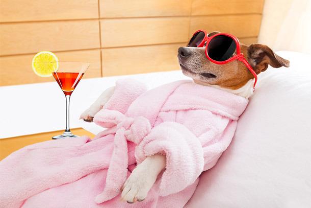 (Foto: Cachorro Spa via Shutterstock)