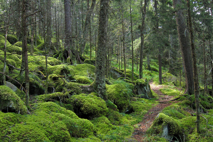Forest on Baxter Creek Trail, Great Smoky Mountains National Park (Photo Credit: Miguel Vieira)