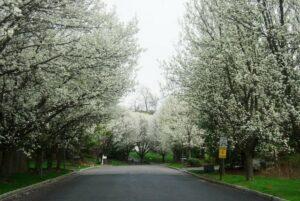 Clima de primavera em North Caldwell, NJ / Crédito da foto: Mislene Santos