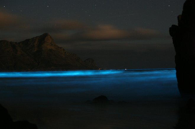 Photo of bioluminescent waves courtesy of BMC Ecology.