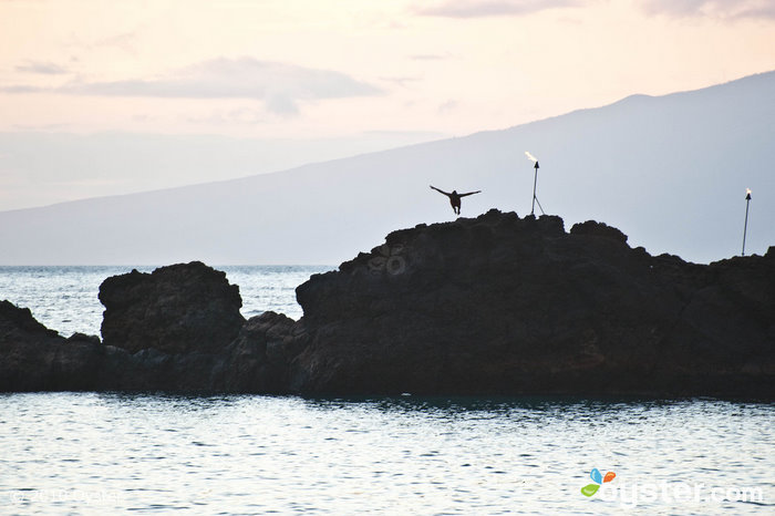 Visitors to Maui should be sure to catch the nightly ceremonial cliff dive off of Black Rock on Kaanapali Beach.