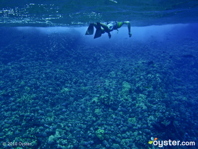 Go snorkeling at Molokini Crater, one of Maui's best snorkeling spots