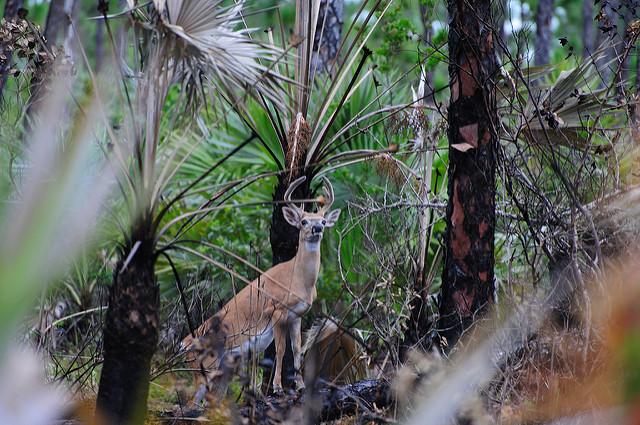 Photo courtesy of U.S. Fish and Wildlife Service Southeast Region via Flickr