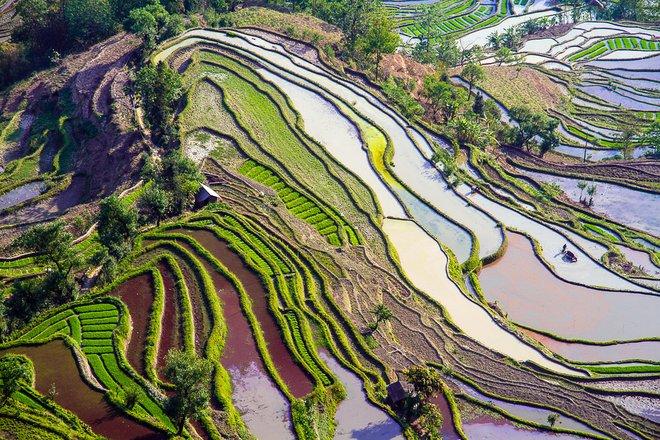 Mit freundlicher Genehmigung von  Flickr / Hoang Giang Hai