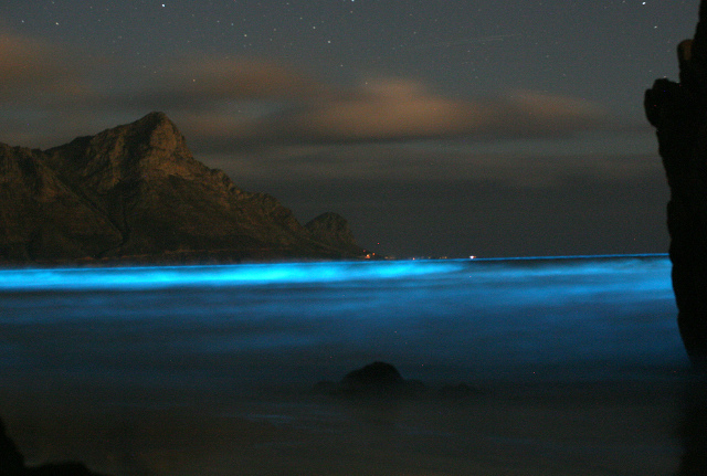 7 Bioluminescent Beaches And Bays That