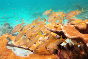 Courtesy of Flickr/SnorkelingDives.com