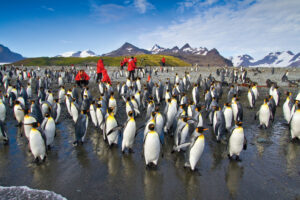 Courtesy of Lindblad Expeditions
