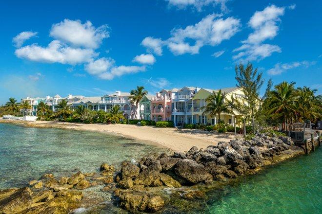 Stuart Cove, Nassau / Oyster