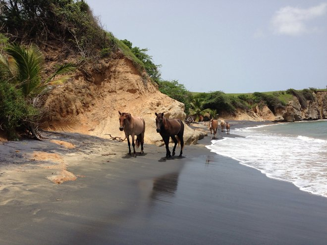 Horses on Playa Negra; karlnorling/Flickr