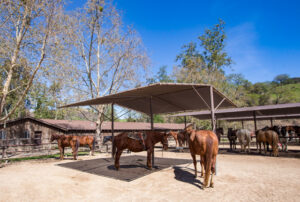 Horse Stables at the Alisal Guest Ranch & Resort/Oyster