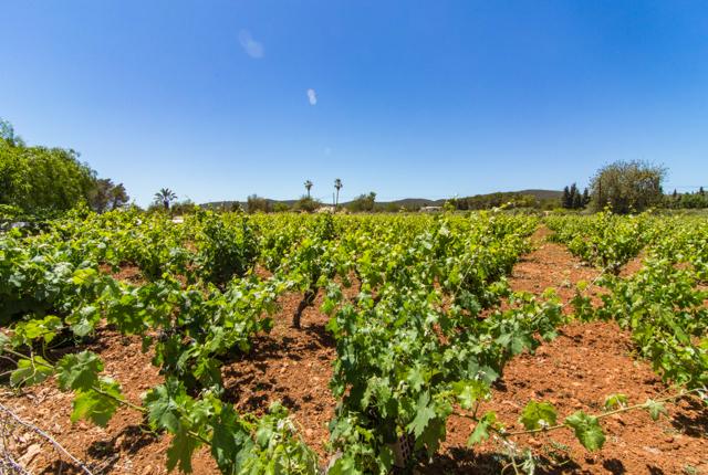 Der Garten im Agroturismo Sa Vinya D'en Palerm / Oyster