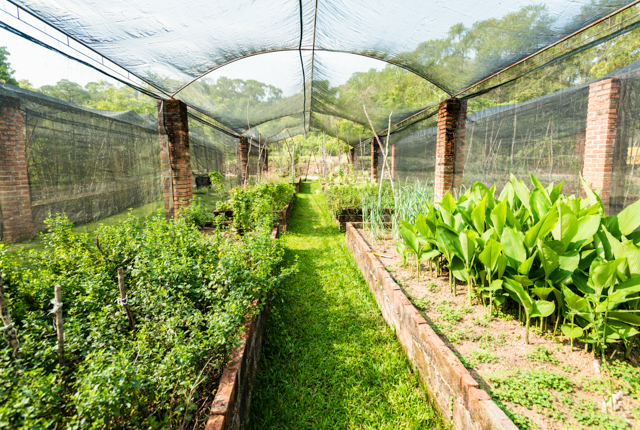 The Organic Farm en Villa Azalea, Inn & Organic Farm / Oyster