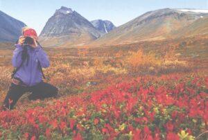 Photo courtesy of Clara Nyström, Scandinavian Photoadventures