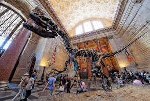 American Museum of Natural History; Don DeBold/Flickr