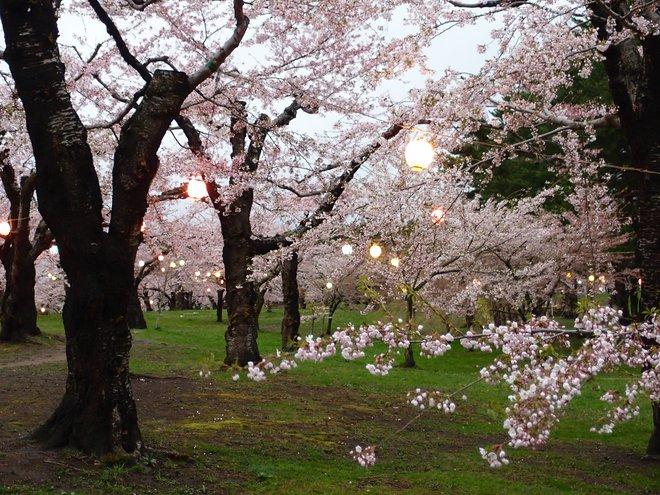 Yuki Shimazu / Flickr