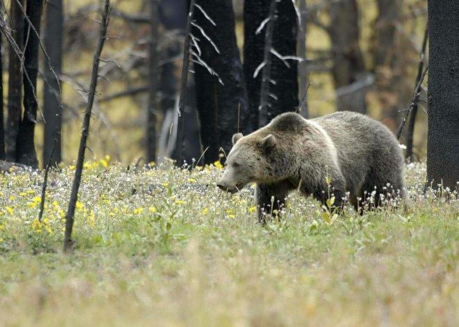 Yellowstone National Park; NPCA Photos/USFWS/Flickr