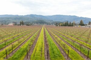View from the Harvest Inn by Charlie Palmer in St. Helena, Napa Valley/Oyster