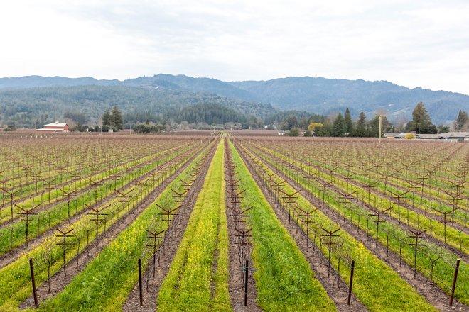 Vista da pensão da colheita por Charlie Palmer em Santa Helena, Napa Valley / Oyster