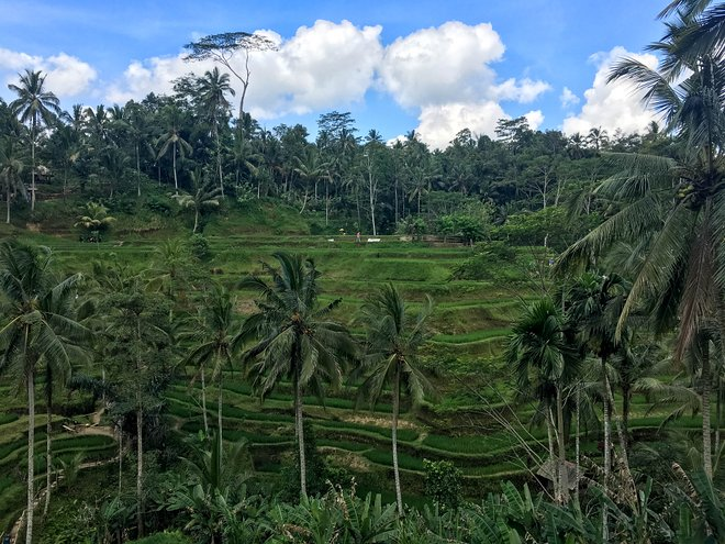 Bali, Indonesien / Auster