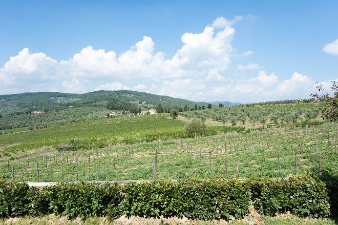 Tuscany/Oyster