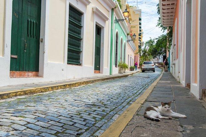 Old San Juan/Oyster