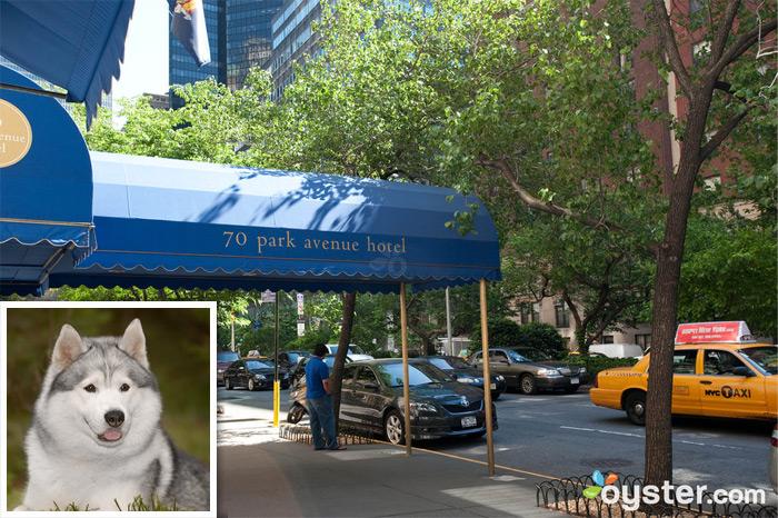 Credit: Courtesy of Flickr.com (dog); The entrance to 70 Park Avenue Hotel; New York City, NY