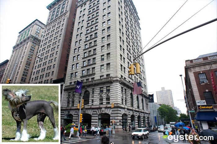 Crédit: Courtoisie de Flickr.com (chien); L'entrée du W Union Square; New York City, NY
