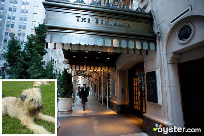 Credit: Courtesy of Flickr.com (dog); The entrance to The Benjamin; New York City, NY