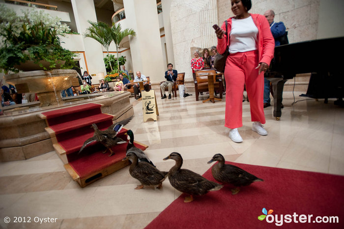 Duck March in The Lobby of The Peabody Orlando