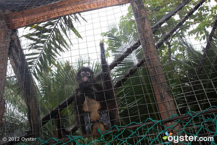 Zoo at The Royal Suites Punta Mita by Palladium