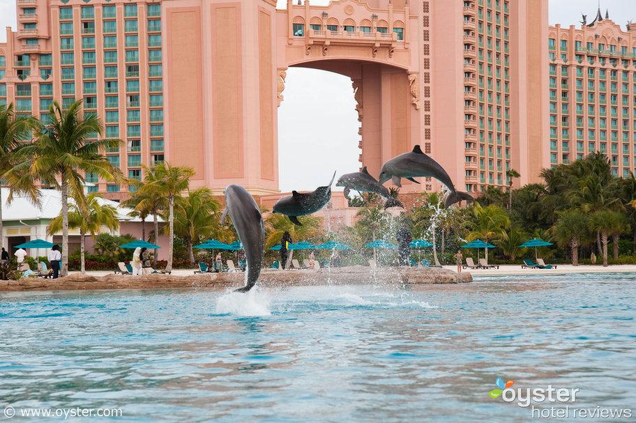Dolphin Cay, Atlantis Paradise Island