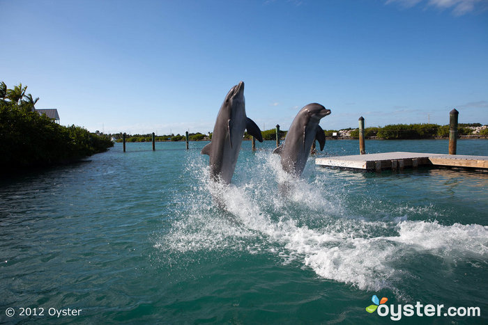 Dolphin Connection at the Hawks Cay Resort
