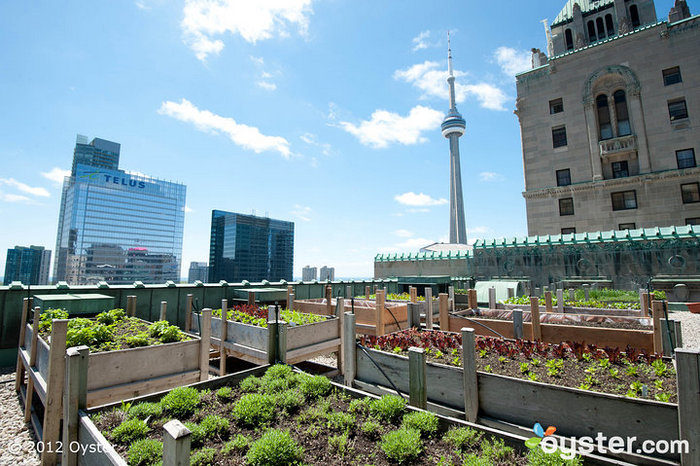 Rooftop Herb Garden at the Fairmont Royal York, Toronto