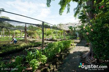 El jardín orgánico del Turtle Inn de Belice es solo una de las muchas prácticas ecológicas del complejo.