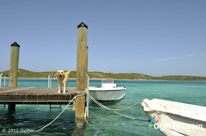 Fido wants to come to the Bahamas with you, too.