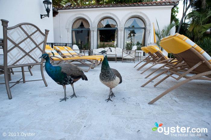 The Resort at Fisher Island Club, Miami
