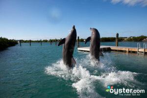 Hawks Cay Resort at Duck Key.