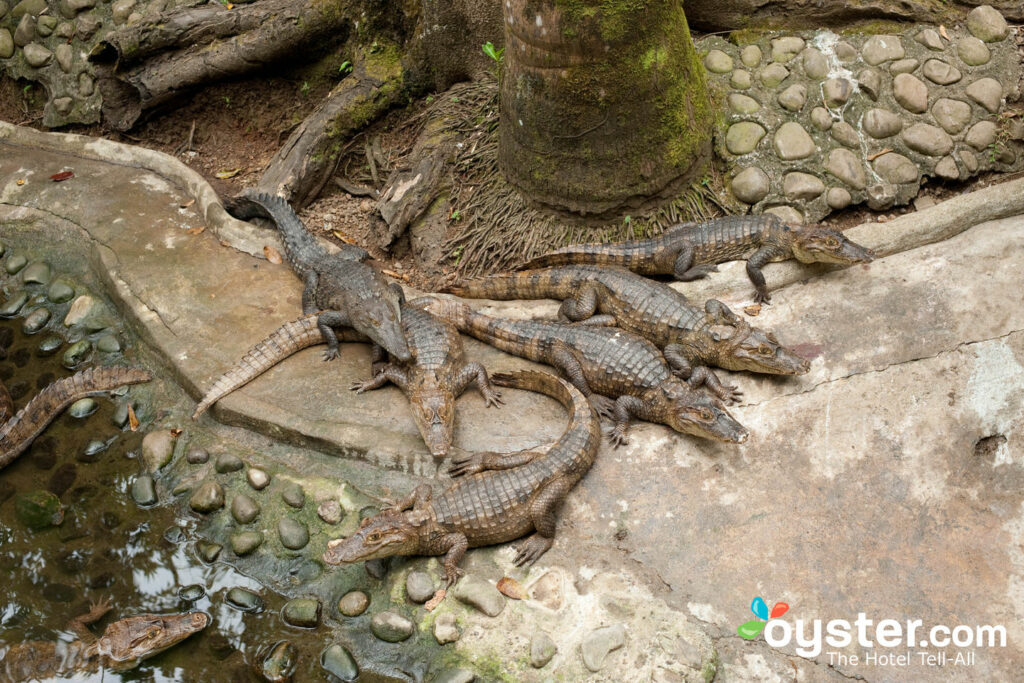 Channel your inner crocodile hunter at Si Como No Resort, Spa and Wildlife Refuge.