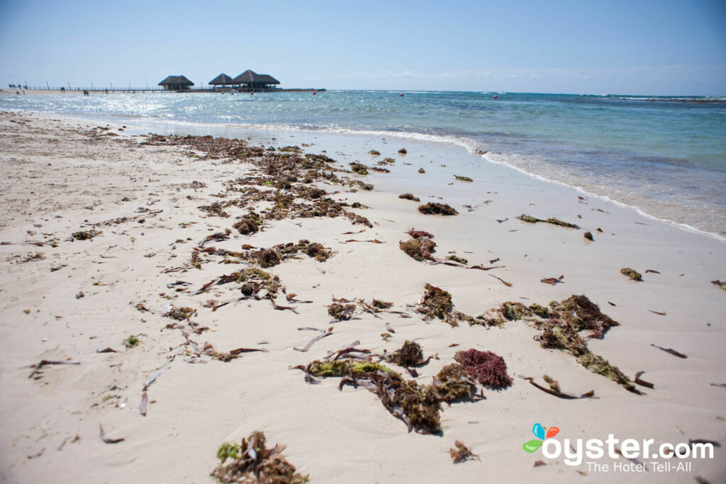 Don't Panic! Caribbean Seaweed This Year May Not Be That Horrible