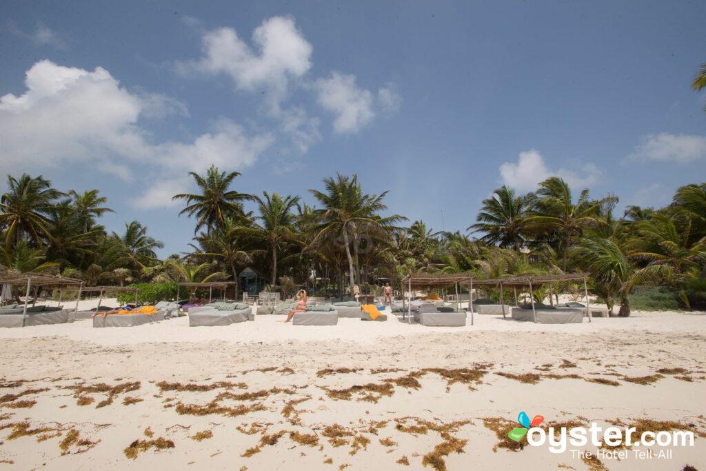 ¡Encuentra las escurridizas algas arrastrándose por la playa!